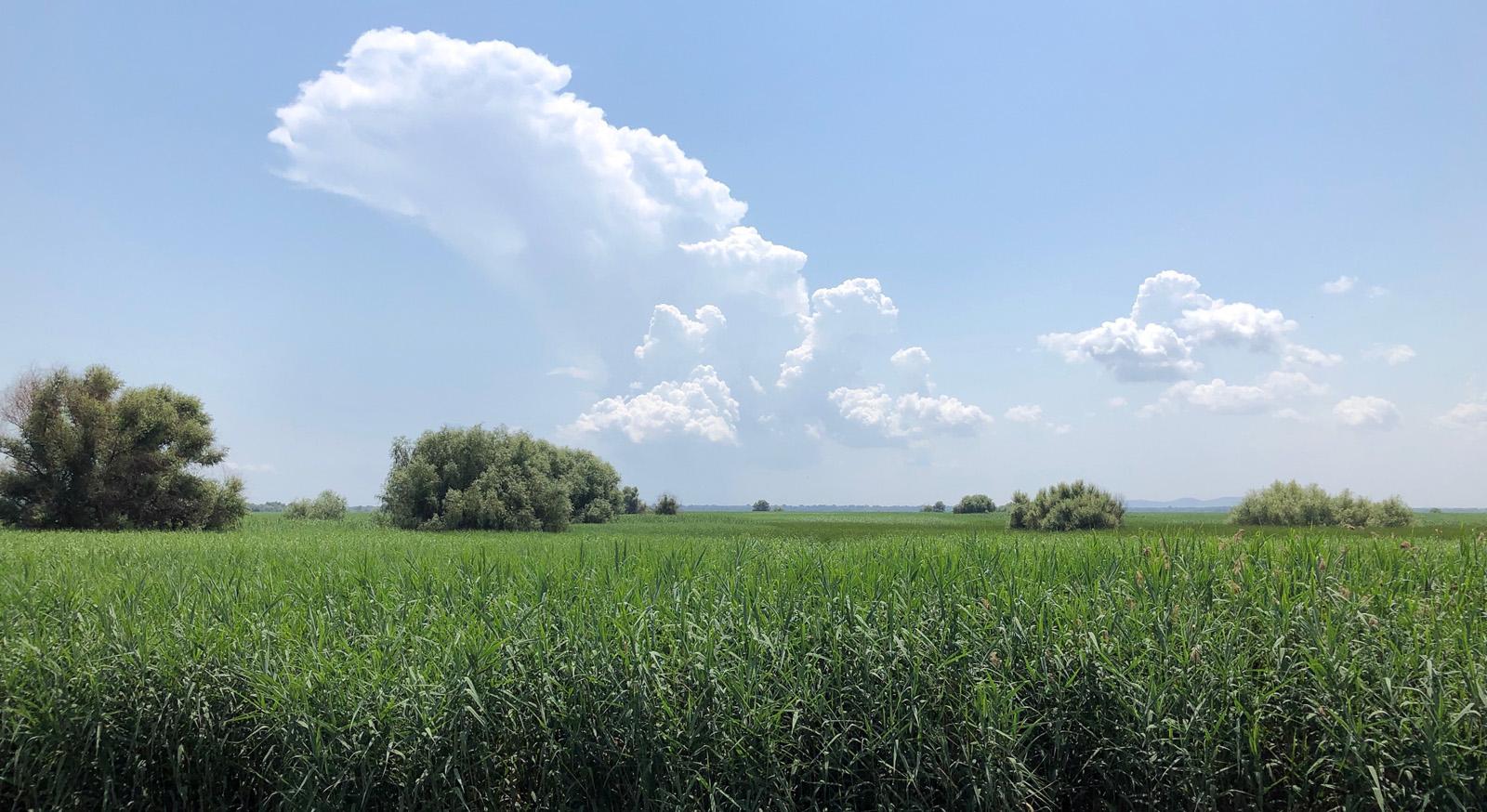 Donaudelta